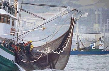Pesca Pesca Al Cerco 2015 | Personal Blog